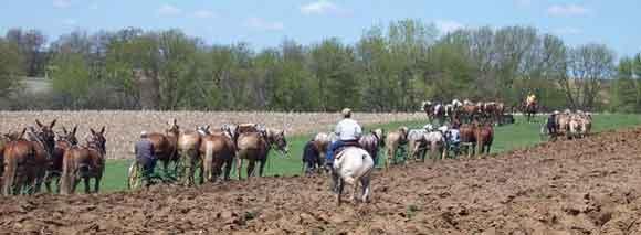 draft teams plowing