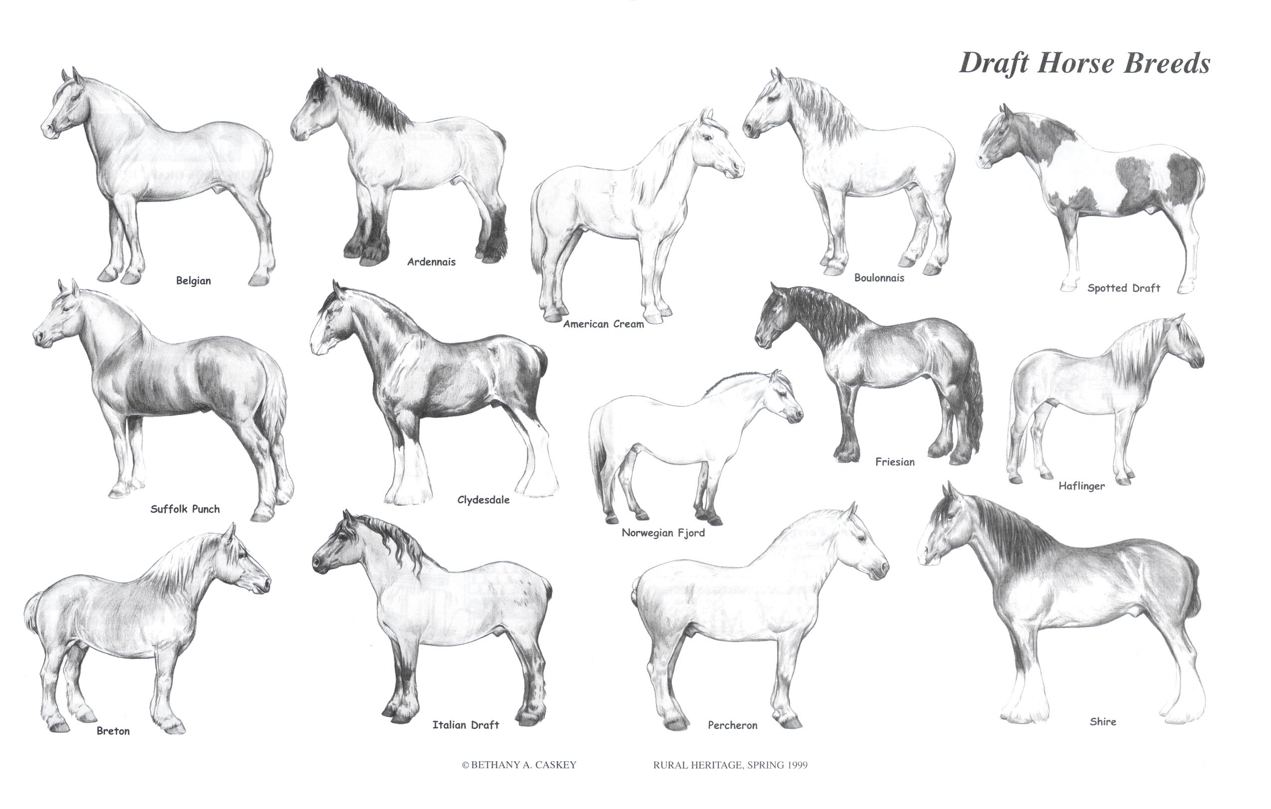 rural heritage draft horse breeds illustration