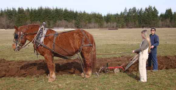 plowing with draft horse