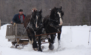 Draft Horse sled
