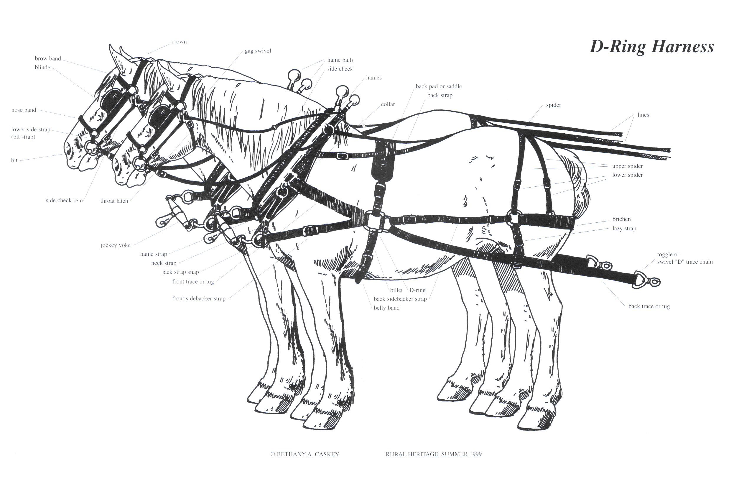 d-ring harness illustrations