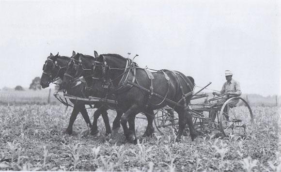 3 abreast cultivating corn
