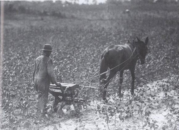 drilling oats