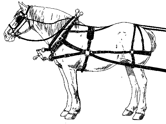 D-ring harness