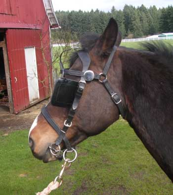 safety crown on bridle