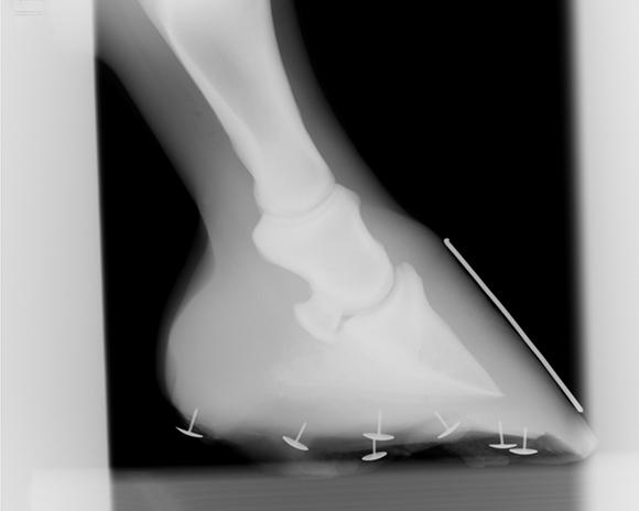 horse hoof x-ray