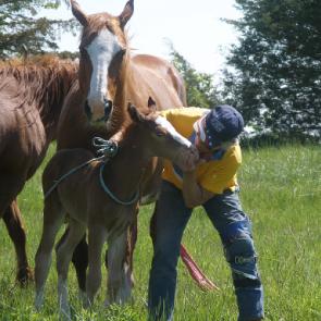 foal imprinting