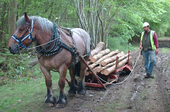 horse logging team