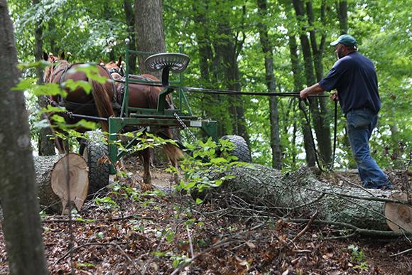 Vintage Image of horse logging