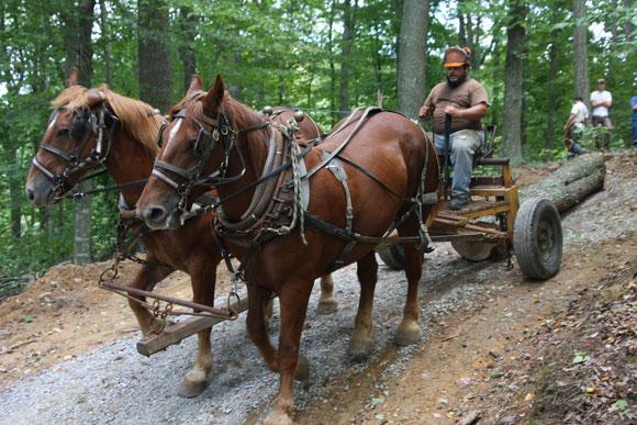 horse logging Gallery