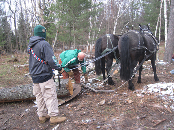 horse logging with Doc Hammill