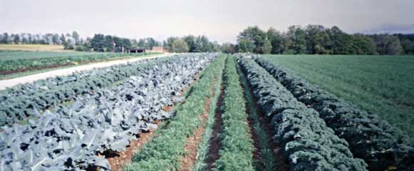 vegetables and cover crops