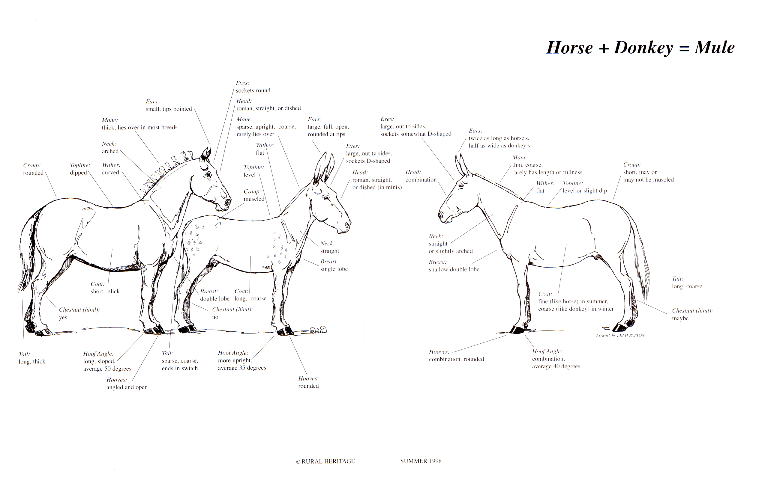 donkey+horse=mule illustrations